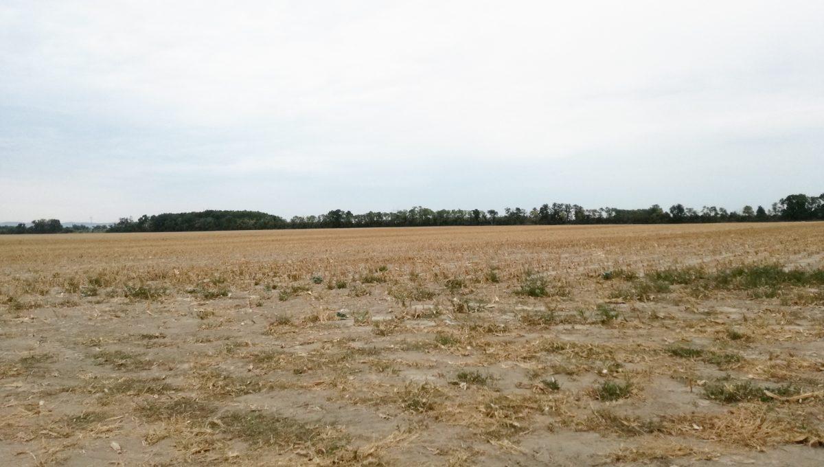 Puste-Ulany-rozsiahly-pozemok-158650-m2-pohlad-z-cesty-prvej-triedy