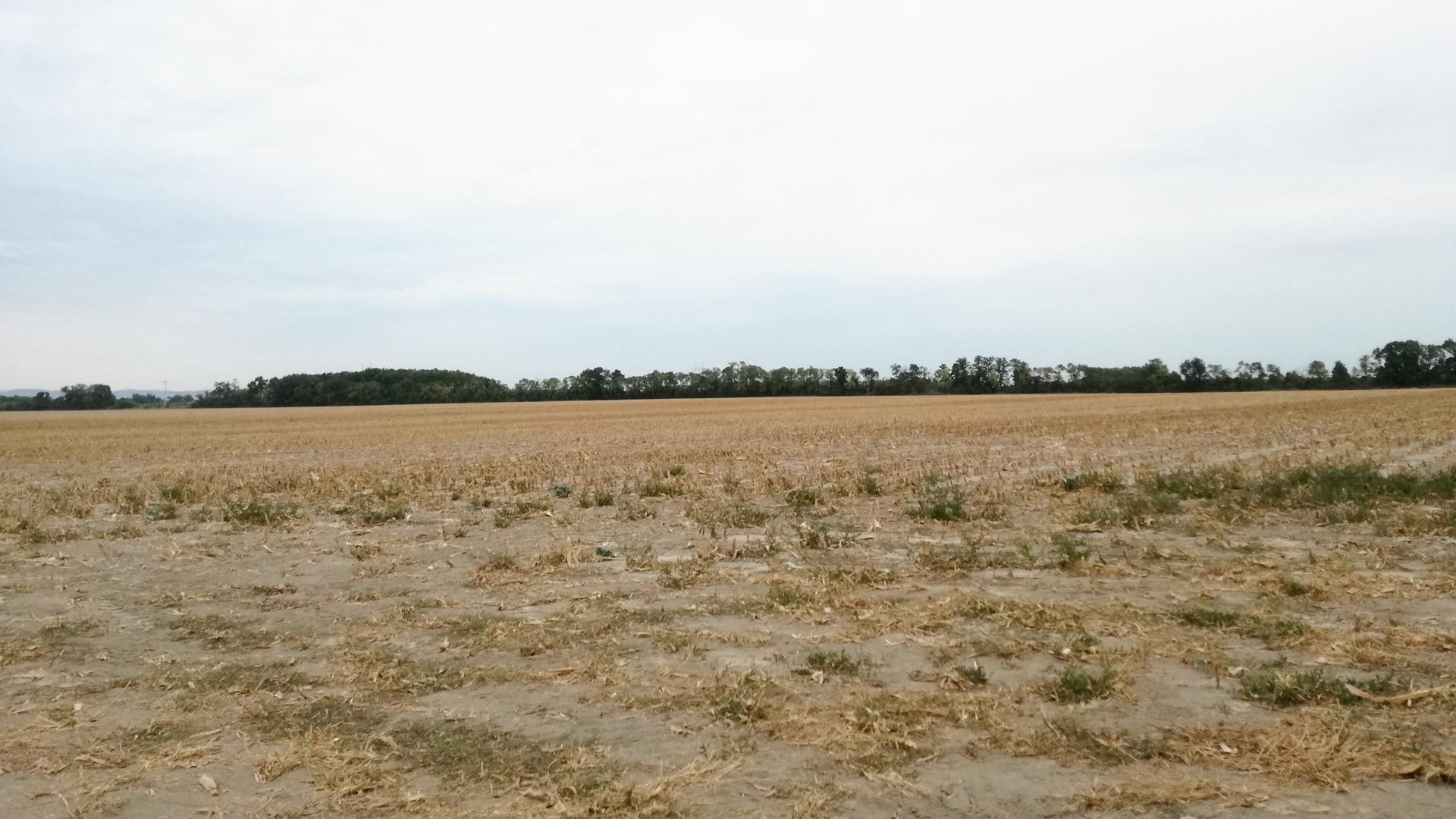 Orná pôda, Pusté Úľany
